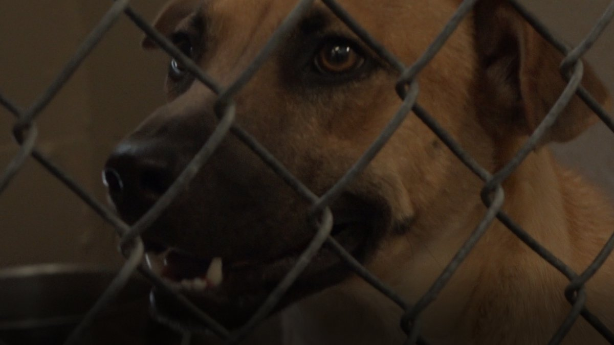 Sally sits in her kennel at Casper Humane Society on June 8