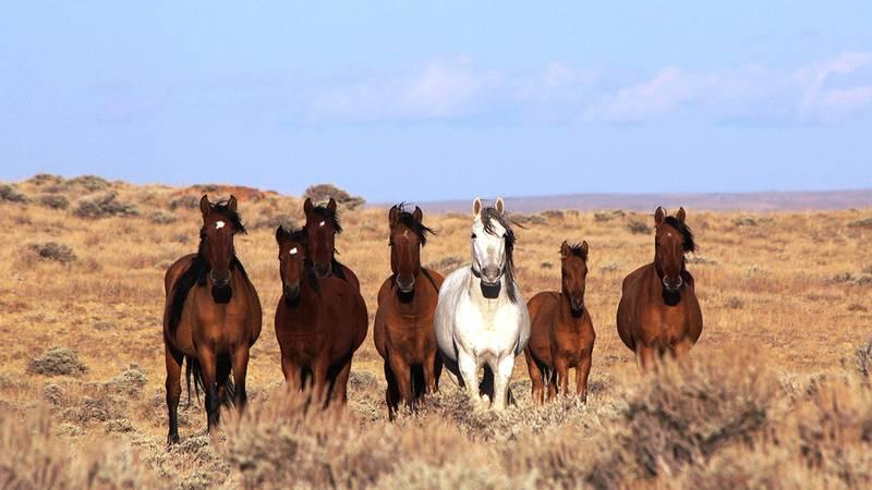 Courtesy: BLM-Wyoming