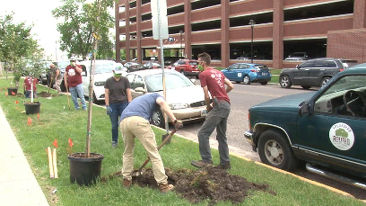 Rooted in Cheyenne planting trees for CRMC employees.