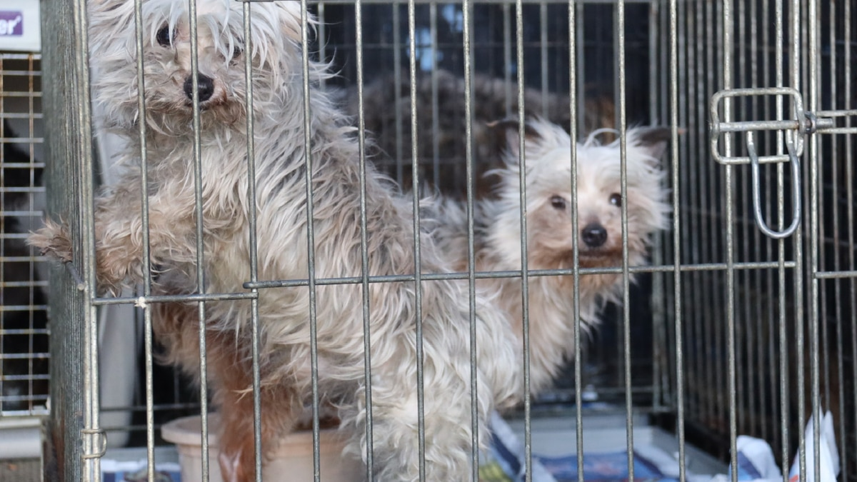 Two out of the forty-five dogs rescued Jan. 9. Photo courtesy Casper Police Department.
