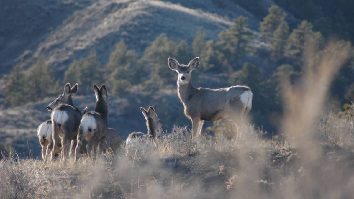 Governor Gordon Launches First Local Area Working Group For Platte Valley Mule Deer Corridor