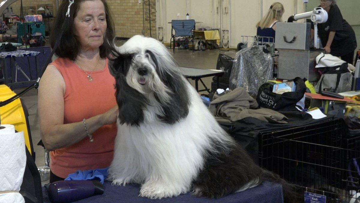 Baker and his owner preparing for shows at the Central Wyoming Kennel Club dog show
