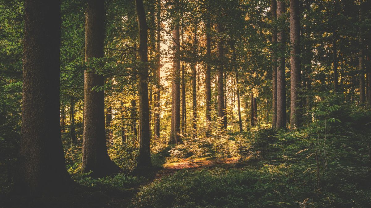 Generic forest photo. (Photo by Lum3n.com from Pexels)