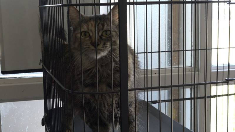 A cat watches from their crate at Metro Animal Shelter