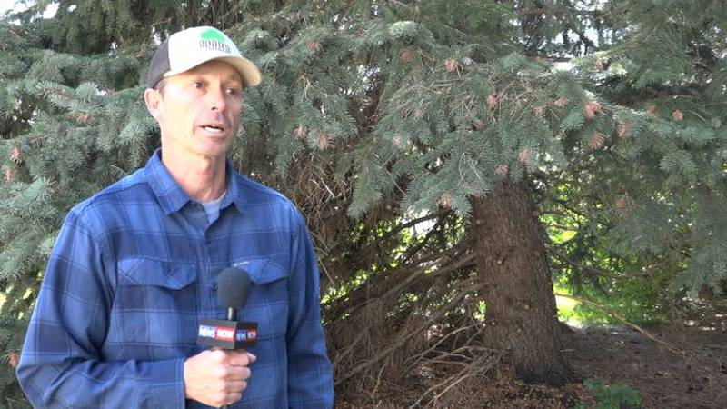 Mark Ellison, Urban Forestry Department Manager, talks about Rooted in Cheyenne hosting their...