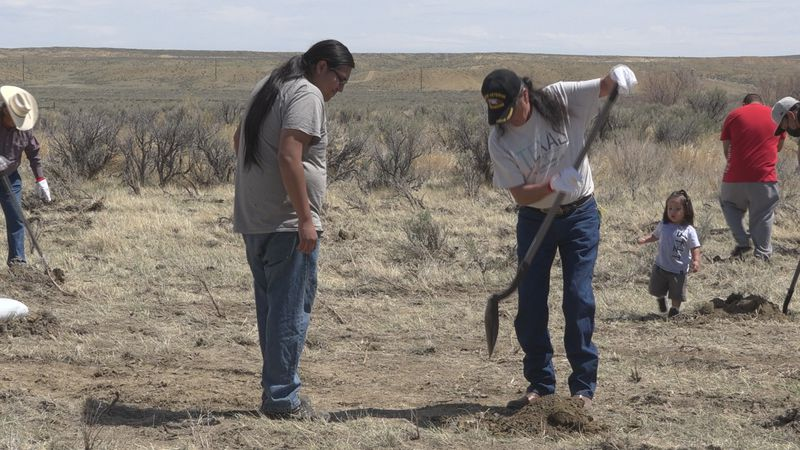 Community members planting chokecherry trees in Ethete, WY on May 7, 2021