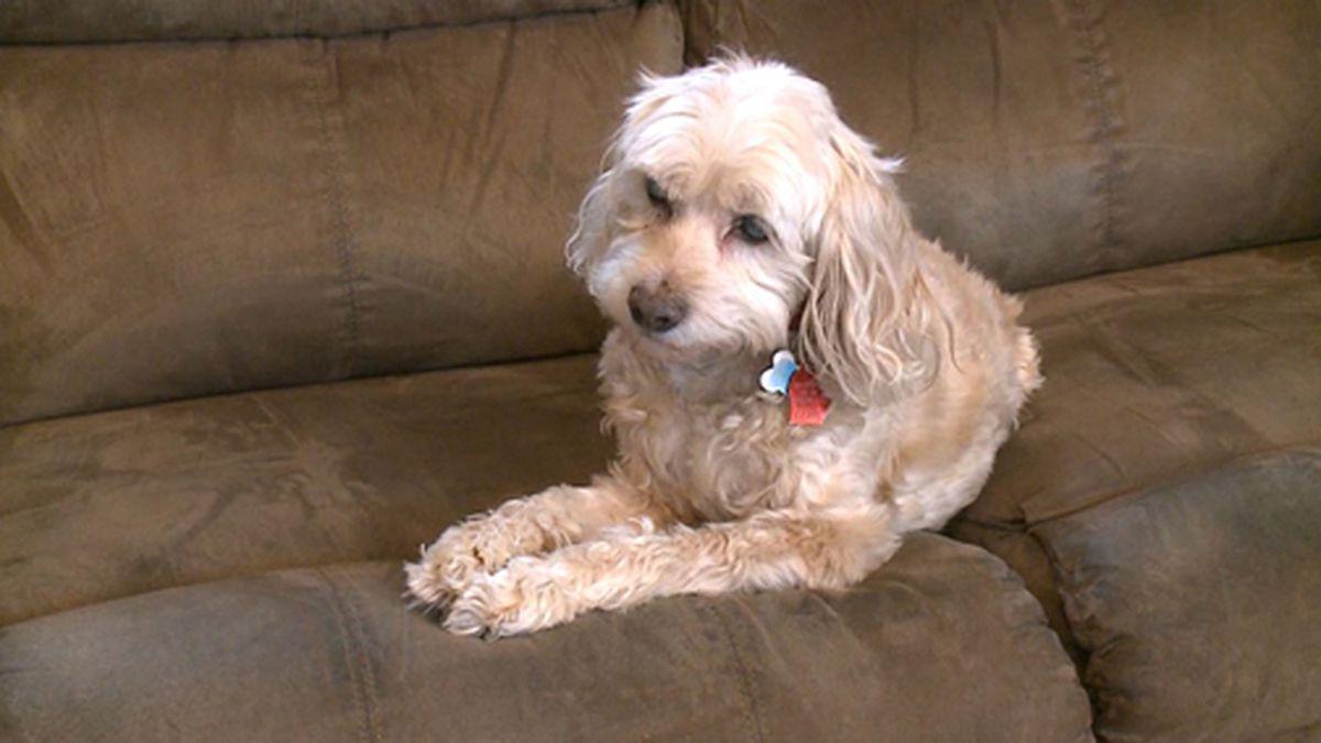 A dog helped his Michigan family detect a carbon monoxide leak. (Source: WXMI/Tribune/CNN)