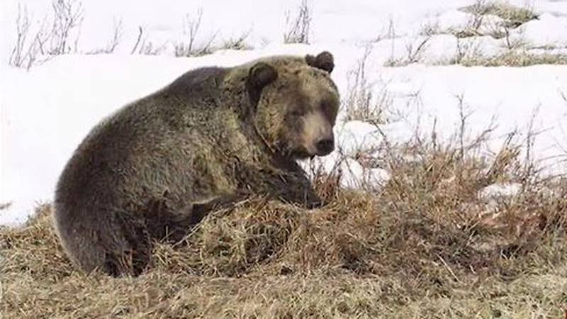 Bears will be more active during fall feeding frenzy.