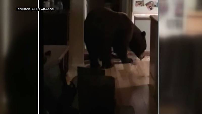 Melissa Bryant and her husband found a bear rummaging around in their kitchen after it barged...