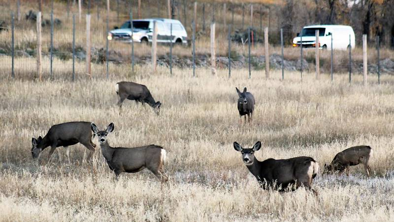 Now is the time of year when animals migrate from the high country as temperatures drop.