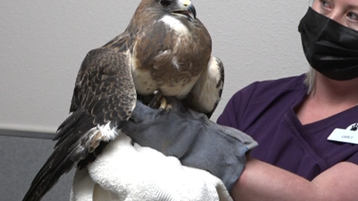 Cheyenne Pet Clinic saved 352 animals last year with Wildlife Rehabilitation Program
