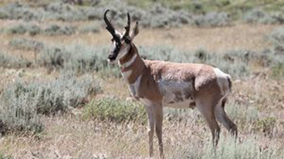 The coronavirus has prompted cancellation of a  charity antelope hunt that has drawn teams of famous, powerful men to  Wyoming and has been facing growing criticism that its ceremonies  crudely and inaccurately appropriate Native American culture.