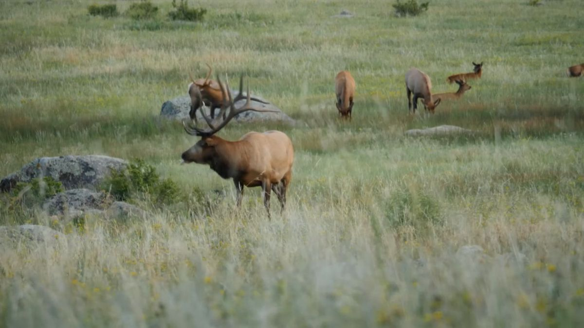 Wyoming big game hunting applications continued to swell in the 2020 draw