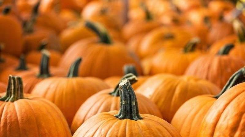 307 Vendor Co-op to host Pumpkin Fest