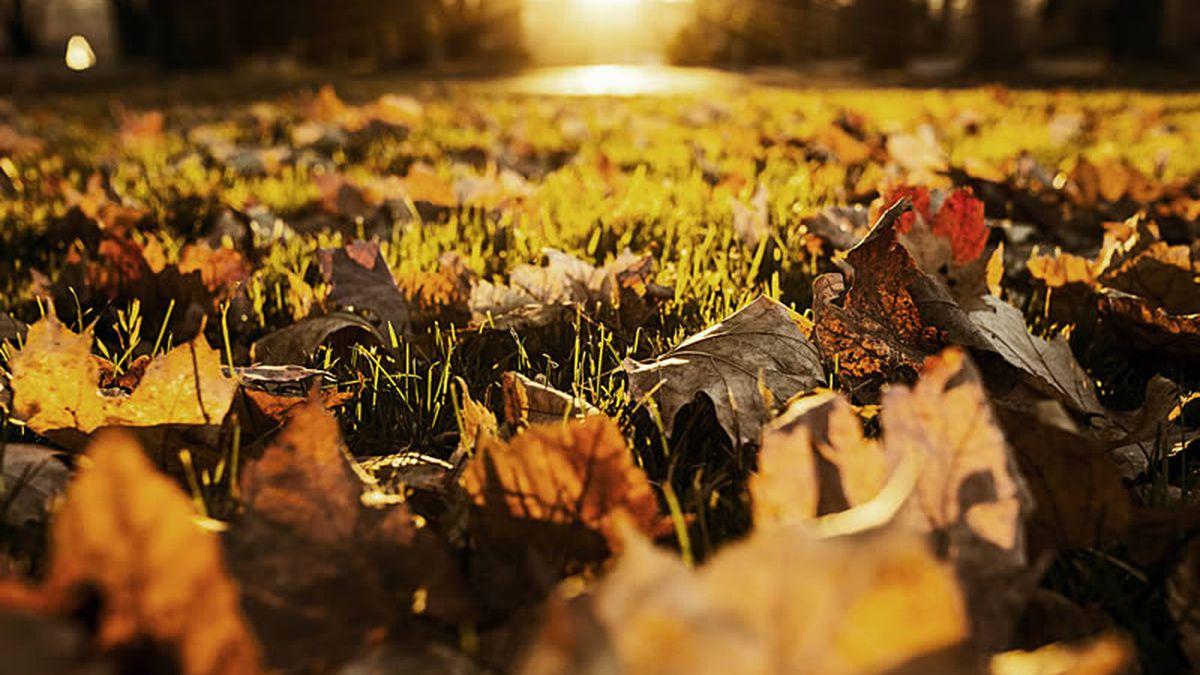 Fall leaves (Pixabay)